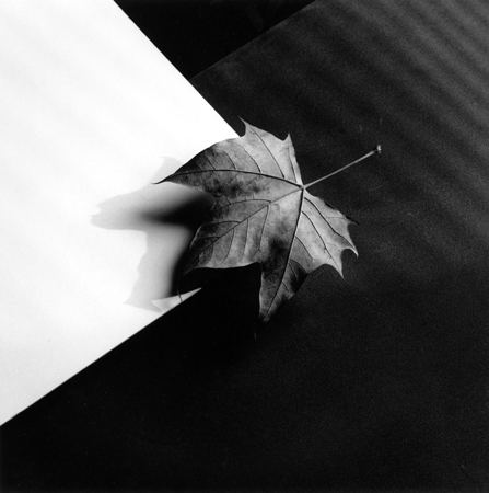 , 'Leaf,' 1986, Weinstein Gallery - Minneapolis