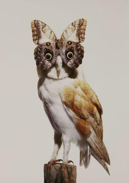 Nancy Fouts, 'Owl With Butterfly', 2012, Sworders