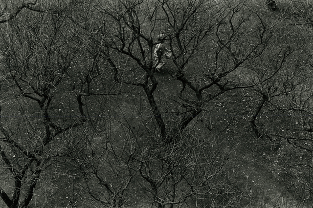 Judy Dater, 'In the Brambles, Japan', Be-hold
