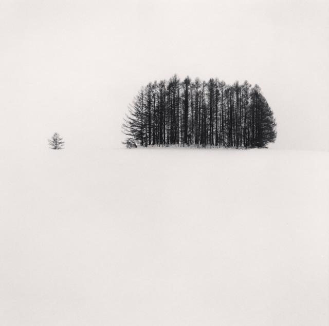 , 'Copse and Tree, Mita, Hokkaido, Japan,' 2007, photo-eye Gallery