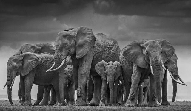 David Yarrow, 'The Circle of Life II', Photography, Visions West Contemporary