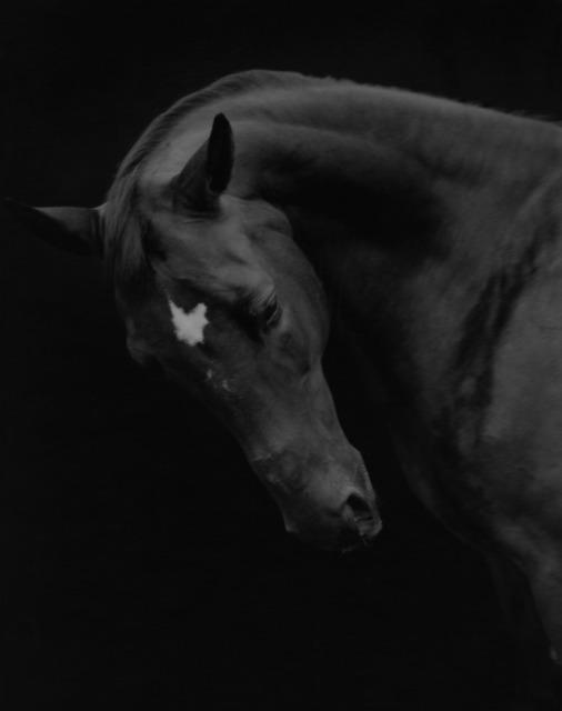 Sheila Rock, 'Horse #72, ', ElliottHalls