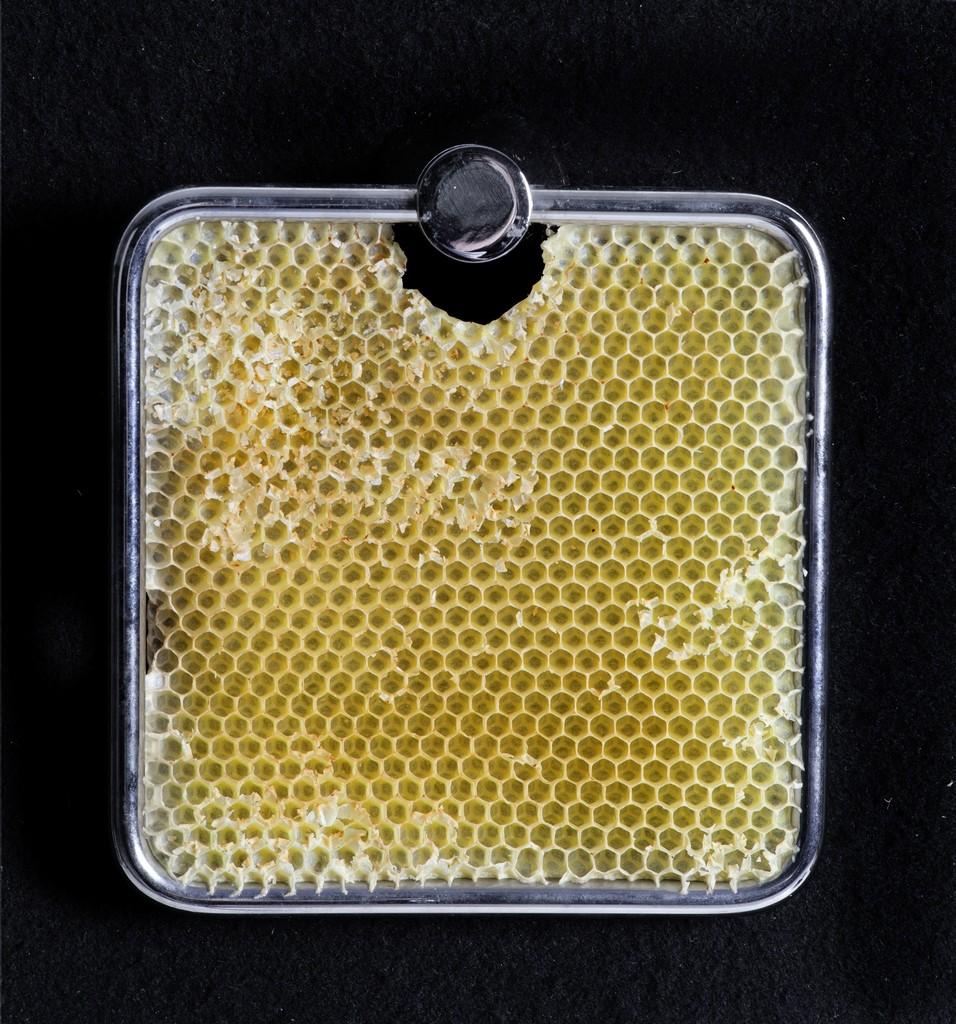 Sema Bekirovic, Untitled (Bees), 2011, gift Pieter en Marieke Sanders.
