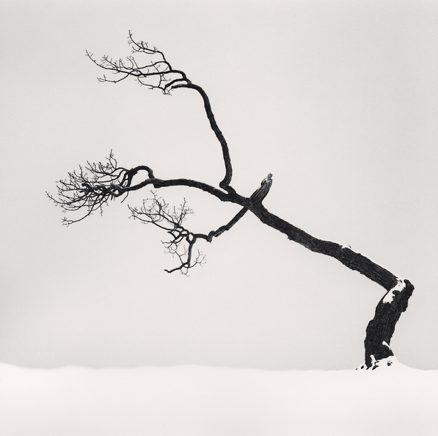 , 'Kussharo Lake Tree, Study 6, Kotan, Hokkaido, Japan,' 2007, Patricia Conde Galería