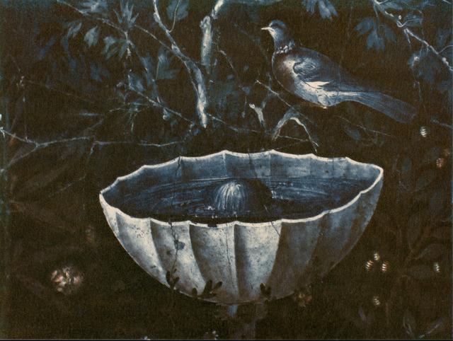 , 'Bird Gardening at Night,' 2015, Panopticon Gallery
