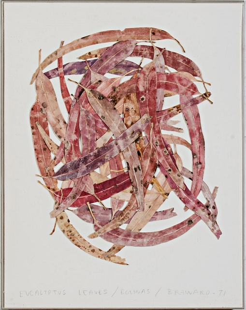 , ' EUCALYPTUS LEAVES/BOLINAS (with Denver Museum of Art Exhibition Label, along with University of Texas Museum of Art and Fischbach Gallery labels),' 1971, Alpha 137 Gallery