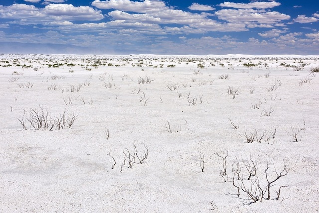 , 'Iodine Bush on Alkali Flats facing Dune Field, Summer, White Sands National Monument, New Mexico,' ca. 2016, Afterimage Gallery