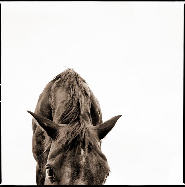 , 'Horse 2,' 2015, Julie Nester Gallery