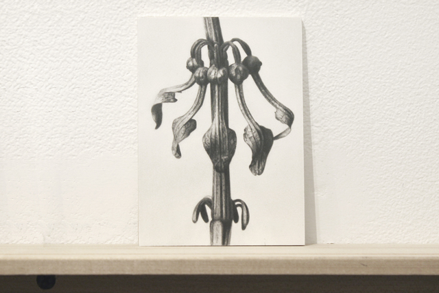 ", 'Formalizing their concept: Sherrie Levine's ""After Karl Blossfeldt:17"",' 2018, Josée Bienvenu"