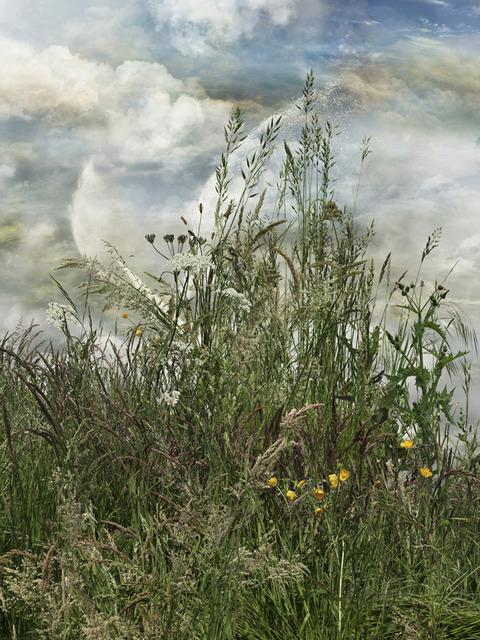 , 'Hierbas 14,' 2011, Trinta