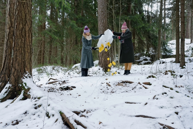 , 'Dumb a bushel of lemons in a Northern forest in winter,' 2017, Galleria Heino