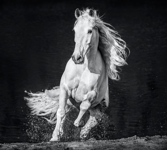 David Yarrow, 'Horsepower', 2020, Photography, Archival Pigment Print, Samuel Lynne Galleries