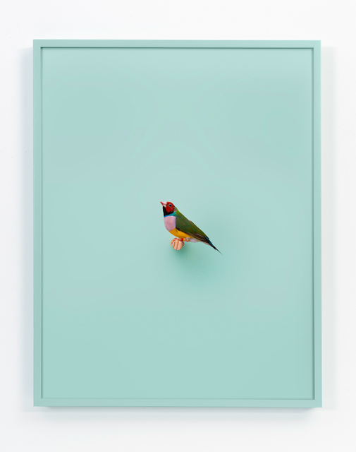 , 'Lady Gouldian Finch (Mint),' 2017, ClampArt