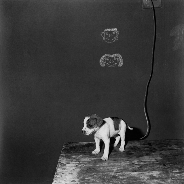 , 'Puppy on Table,' 2000, Willas Contemporary