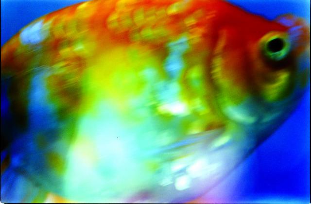 , 'Liquid Dreams,' 2003, Tomio Koyama Gallery