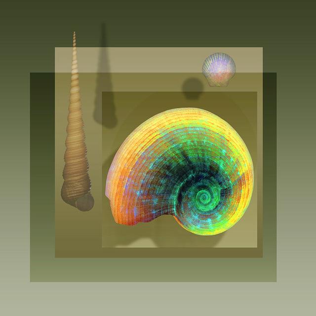 , 'Floating Snail,' 2017, Florida Fine Art