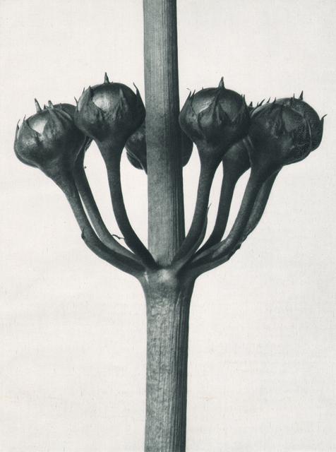 , 'Urformen der Kunst ,' 1928, Atlas Gallery