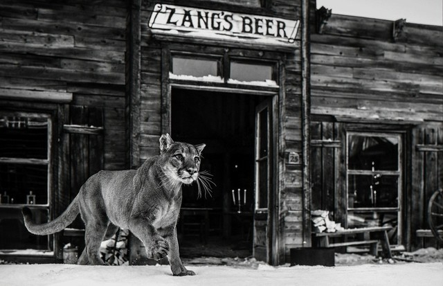 David Yarrow, 'It's Closing Time', ca. 2015, Photography, Archival Pigment Print, Samuel Lynne Galleries