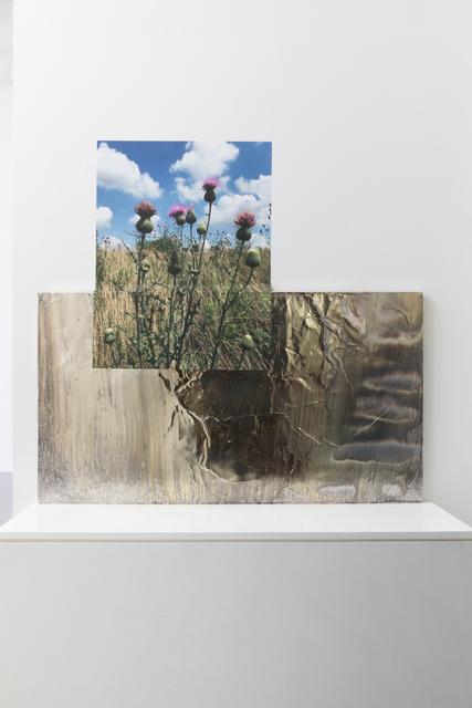 Asif Mian, 'Milkweed Stage', 2019, CRUSHCURATORIAL