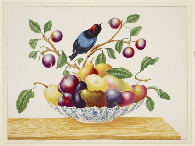 , 'Still life with fruit and Blue-Backed Manakin,' ca. 1705, Royal Collection Trust