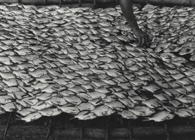 Graciela Iturbide, 'Pescaditos de Oaxaca, Oaxaca', 1992, Robert Mann Gallery