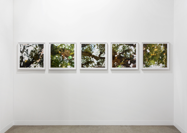 , 'Floating Cherry Blossoms (Stream),' 2016, Galerie Nordenhake