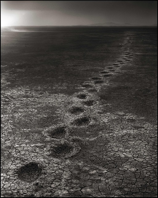 , 'Elephant Footprints, Amboseli 2012,' 2012, photo-eye Gallery