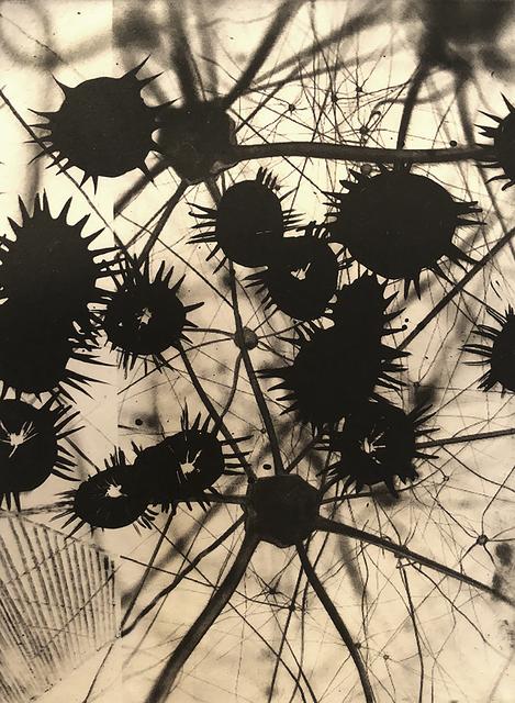Elizabeth Stern, 'neurons', 2018, Pleiades Gallery