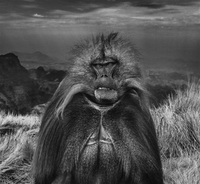David Yarrow, 'Go Ahead Punk, Make My Day', 2018, Hilton Asmus