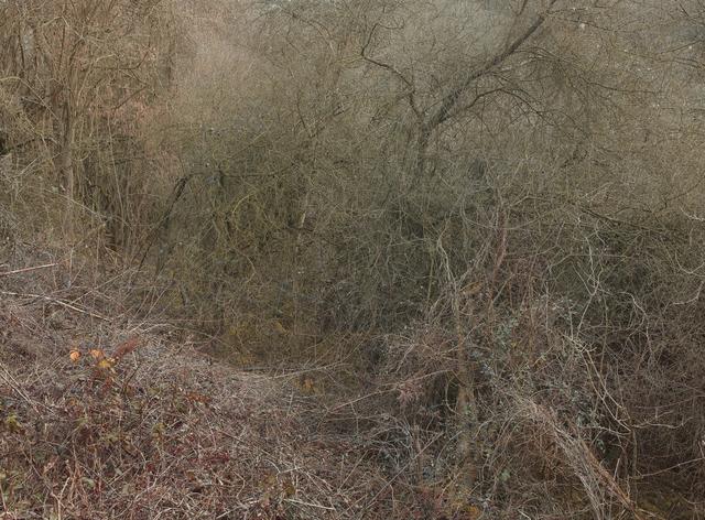 Leon Steele, 'Heath #10', 2011, Photography, Chromogenic Print, Wren London