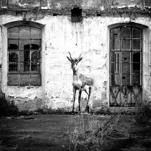 , 'L'Antilope à l'Usine Brusson,' 2018, Mazel Galerie