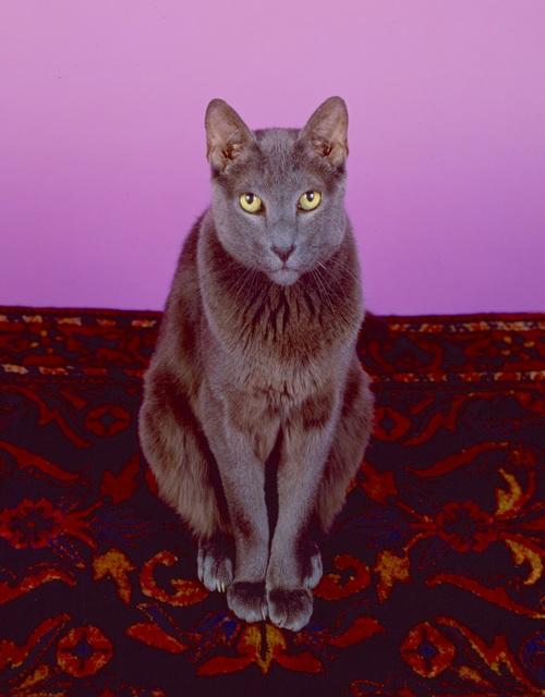, 'Zorba,' 1990, Janet Borden, Inc.