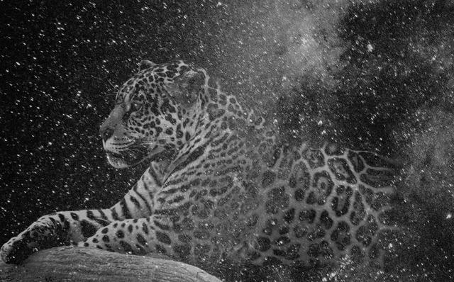 , 'Que muera conmigo el misterio que está escrito en los tigres,' 2016, Alarcón Criado