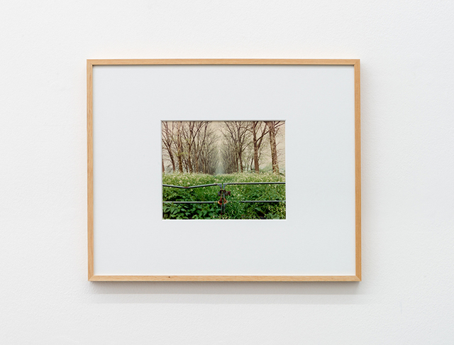 , 'Versailles,' 1985, Galleria Massimo Minini