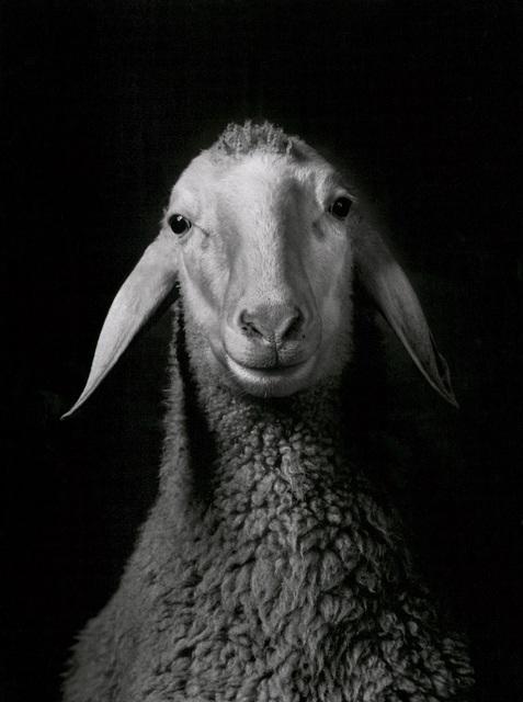 , 'Sheep,' 1984, Galerie Peter Sillem