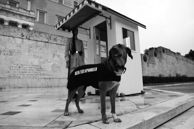 , 'Los Perros Atenienses (detalle),' 2015, Helga de Alvear