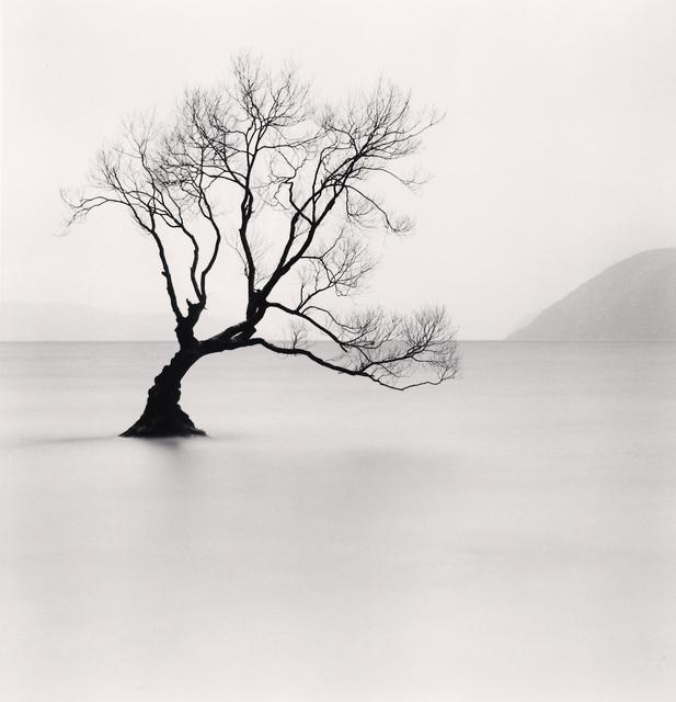 Michael Kenna, 'Wanaka Lake Tree - Study 1, Otago, New Zealand. ', 2013, Photography, Sepia toned silver gelatin print, Galeria de Babel