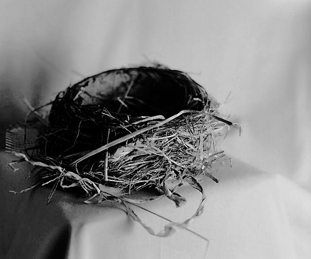 Denise Oehl, 'Nest', 2018, John Davis Gallery