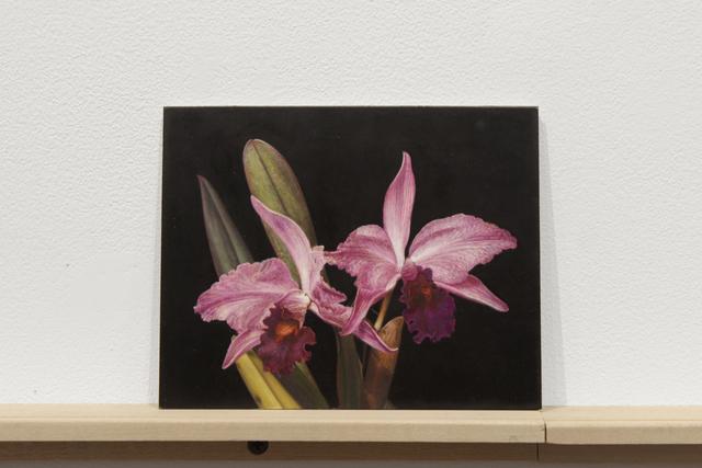 """, 'Formalizing their concept: Sherrie Levine's """"Gottscho-Schleisner Orchids: 5"""",' 2018, Josée Bienvenu"""