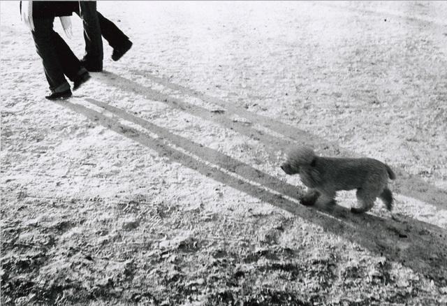 , 'Dog #6,' , Galerie Peter Sillem
