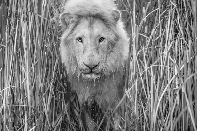 David Yarrow, 'Narnia', 2019, Photography, Archival ink on paper, Fineart Oslo