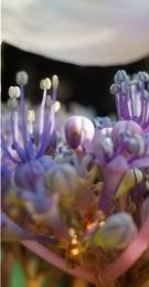 Botanical Exposure
