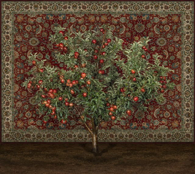 Tal Shochat, 'Apple Tree with Carpet', 2019, Rosenfeld Gallery