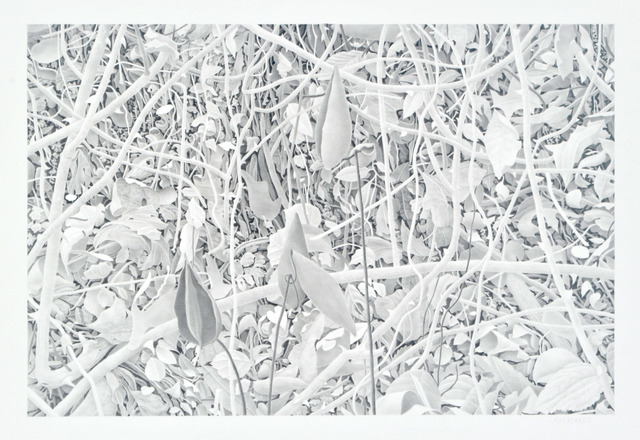, 'Milkweed and Branches,' 2010, Nancy Hoffman Gallery
