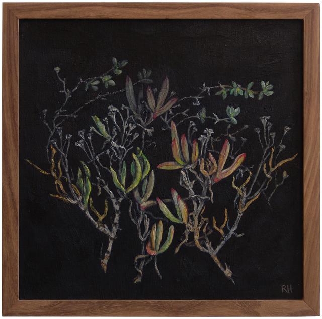, 'Aizoaceae succulents,' 2017, Absolut Art Gallery