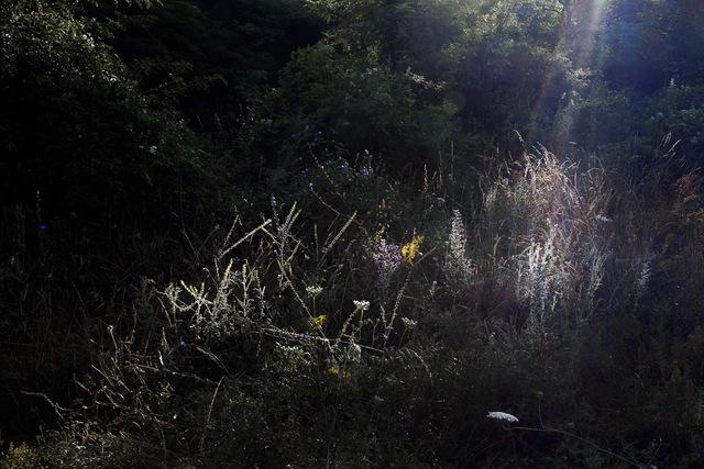 Elspeth Diederix, 'Firework Field', 2016, Casemore Kirkeby