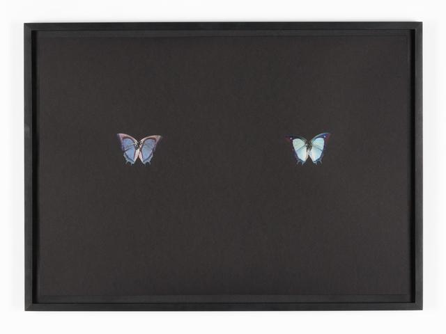 , 'Black Butterfly-Print #23,' 2017, Galerie Lisa Kandlhofer