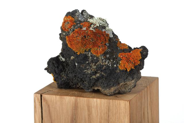 herman de vries, 'die steine (detail)', 2009, 56th Venice Biennale