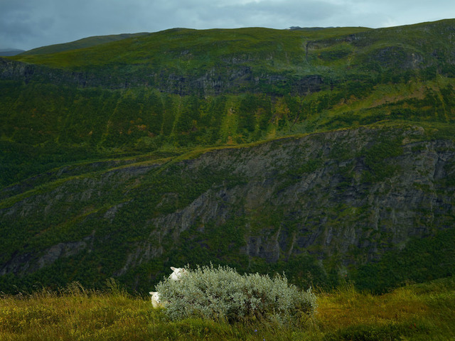 , 'Bashful, Sygnefjell, Norway,' 2013, KLOMPCHING GALLERY
