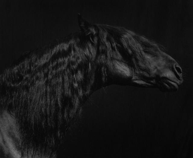 Sheila Rock, 'Horse #55', ca. 1999, Photography, Silver Gelatin print, ElliottHalls